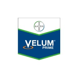 Velum Prime